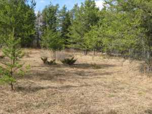 John Kundert's Manitoba Nudist Scrapbook: Gallery 02/10...Clearing roads and land