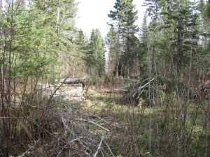 John Kundert's Manitoba Nudist Scrapbook: Gallery 03/02...Clearing the Hydro line corridor
