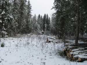 John Kundert's Manitoba Nudist Scrapbook: Gallery 03/27...Clearing the Hydro line corridor