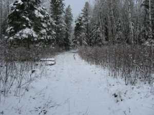 John Kundert's Manitoba Nudist Scrapbook: Gallery 03/30...Clearing the Hydro line corridor
