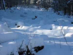 John Kundert's Manitoba Nudist Scrapbook: Gallery 05/05...The new land under December snow