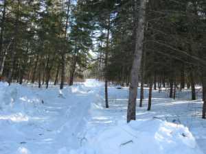 John Kundert's Manitoba Nudist Scrapbook: Gallery 06/07...Hydro tries winter pole installation