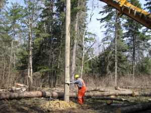 John Kundert's Manitoba Nudist Scrapbook: Gallery 07/20...Hydro installs poles for the power line
