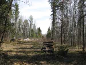 John Kundert's Manitoba Nudist Scrapbook: Gallery 07/24...Hydro installs poles for the power line