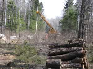 John Kundert's Manitoba Nudist Scrapbook: Gallery 07/25...Hydro installs poles for the power line