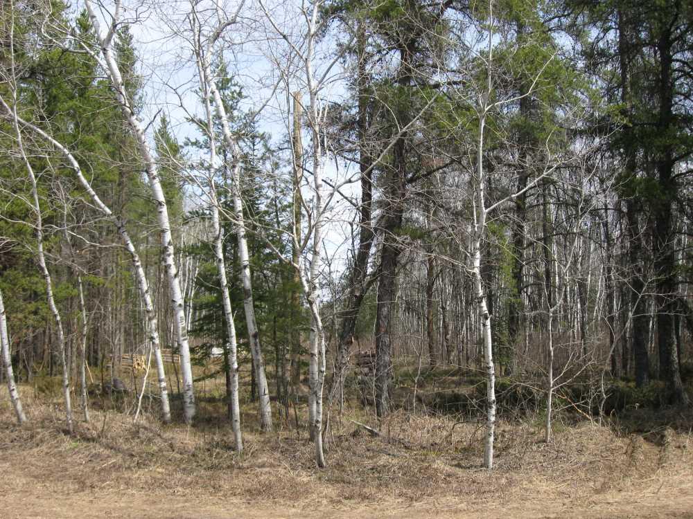 John Kundert's Manitoba Nudist Scrapbook: Gallery 07/41...Hydro installs poles for the power line