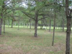 John Kundert's Manitoba Nudist Scrapbook: Gallery 30/11...The meadows in the middle of summer